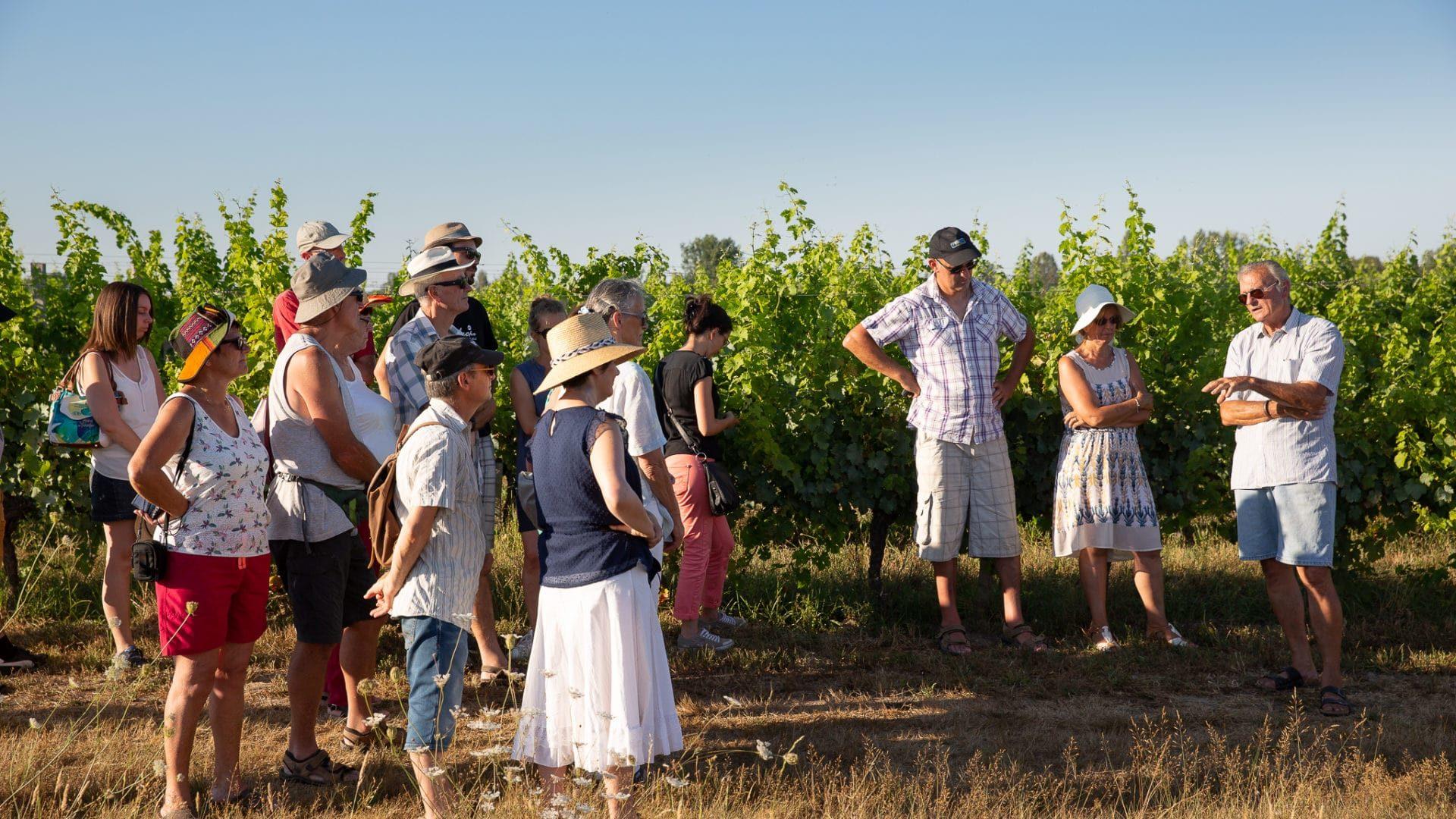 Festibalades : dîner chez le vigneron