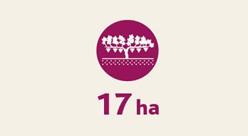 infographie-Blaye-Cotes-de-Bordeaux-superficie-proprietes