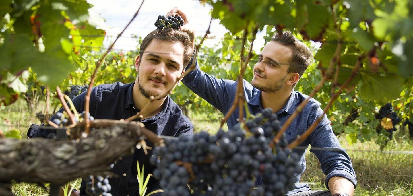 Jeunes vignerons : la relève est assurée !